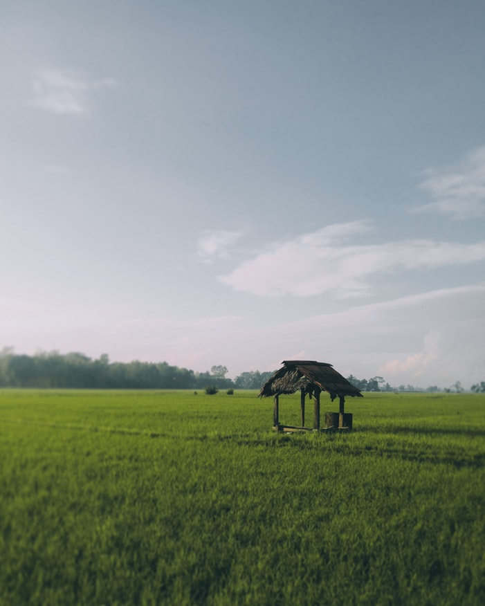 small hut in a middle of a rice field